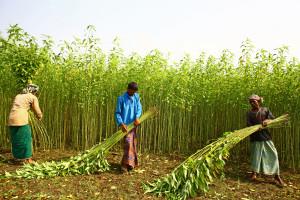 1 - Harvesting